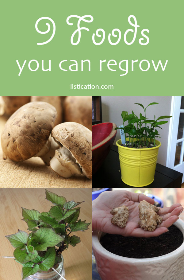 9 foods you can regrow!