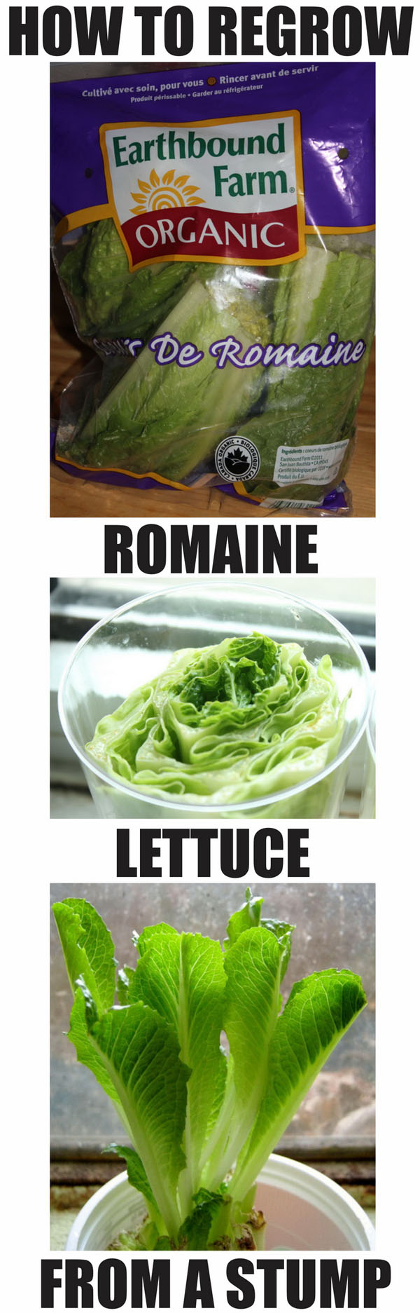 Buy romaine once, eat romaine forever.